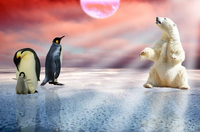 A beautiful but a false picture as both penguins and polar bear being in the same icy place
