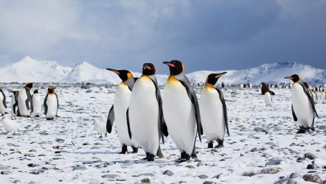 A small group of penguins