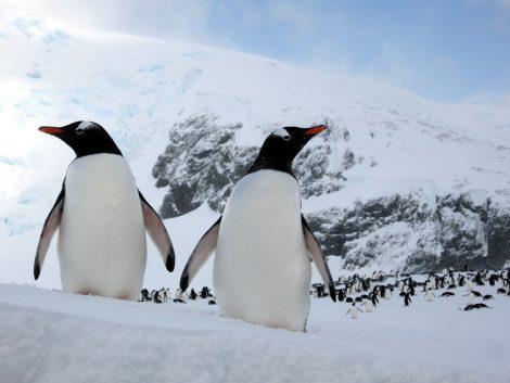 penguin kindergarten